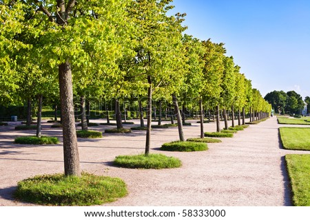 Ornamental trees in the park - stock photo