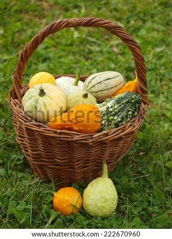 ornaments pumpkins   - stock photo