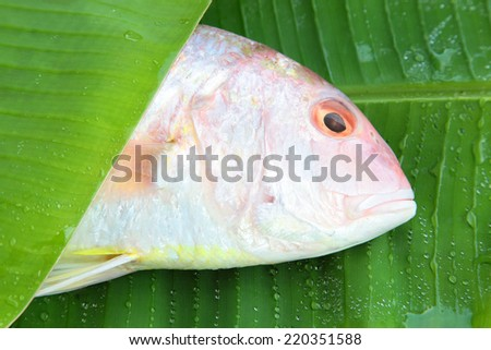 Ornety threadfin bream consist of the family Nemipteridae. the most commercially important species food in the Gulf of Thailand. food material on banana leaf.  - stock photo