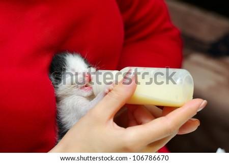 orphan kitten drinking milk from little bottle - stock photo