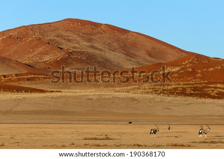 Oryx / Gemsbok at Sossusvlei in the Namib Desert, Namibia, Africa