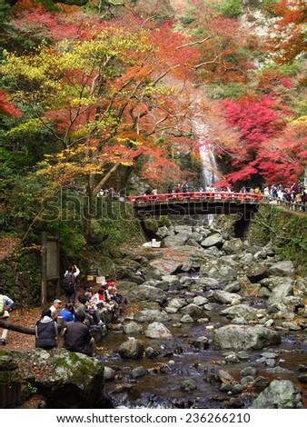 OSAKA, JAPAN - NOVEMBER 28 : Mino Waterfall in high season taken November 28, 2014 in Osaka. There are many people visit Mino in traveling season in autumn. - stock photo