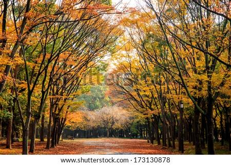 Osaka Park. Image of area in Osaka castle, Osaka, Japan at autumn. - stock photo