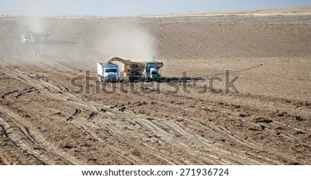 Osgood Idaho, USA Sep 24, 2009- Farmers use machinery in the field harvesting potatoes.  The potatoes are lifted up, and gently plead in a truck for transport.. - stock photo