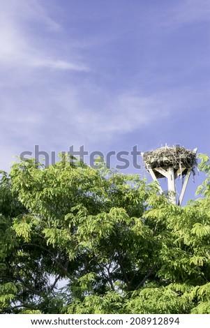 Osprey Nest. Located at Sanibel Island, Florida - USA. - stock photo