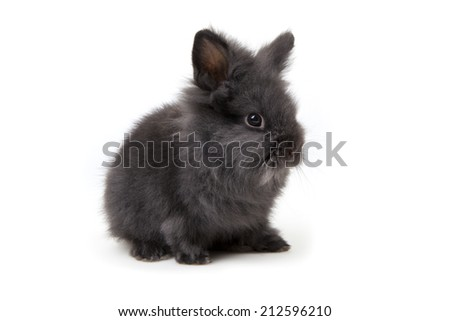 Osterhase - black Easter Bunny - puppy