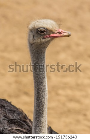 ostrich apathetic expression
