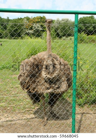 Ostrich behind a fence in a zoo - stock photo