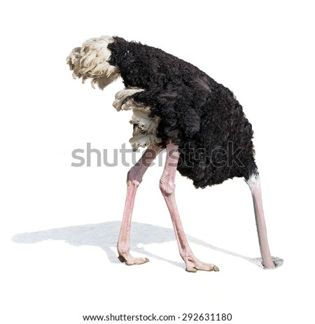 ostrich burying head in sand ignoring problems - stock photo