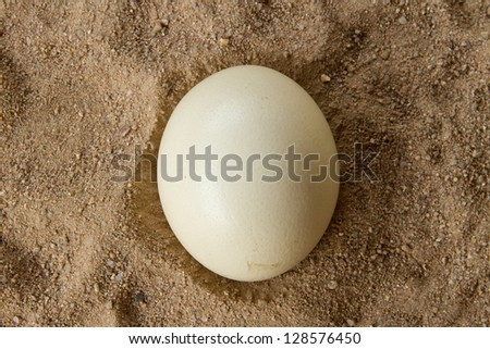 Ostrich egg in the sand tray - stock photo
