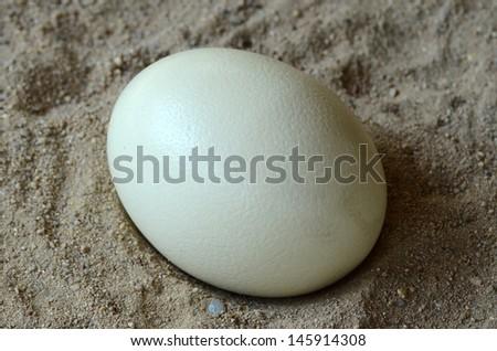Ostrich egg paint  - stock photo