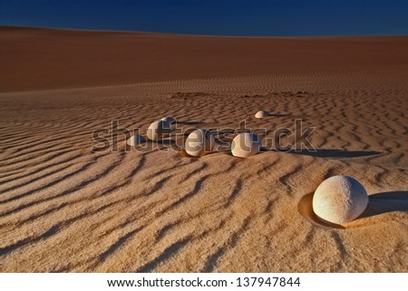 Ostrich eggs on sand dune - stock photo
