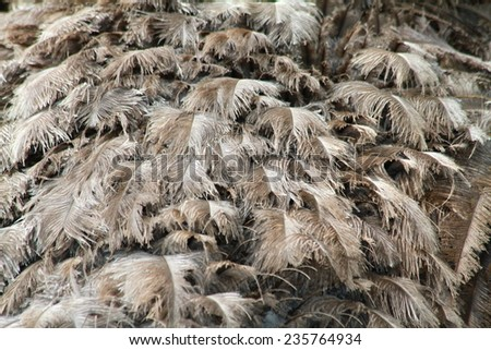 Egg M Nchen ostrich stock photos images pictures