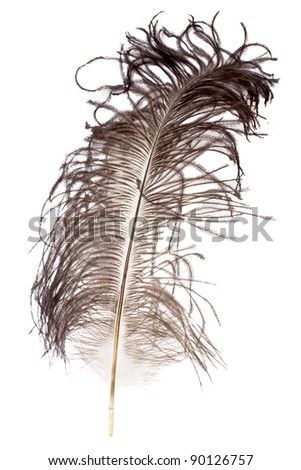 Ostrich feather on white background - stock photo