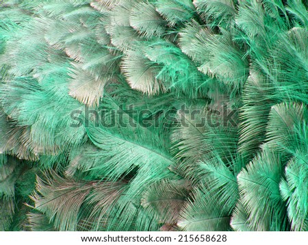 Ostrich Feather Stock Images Royalty Free Images