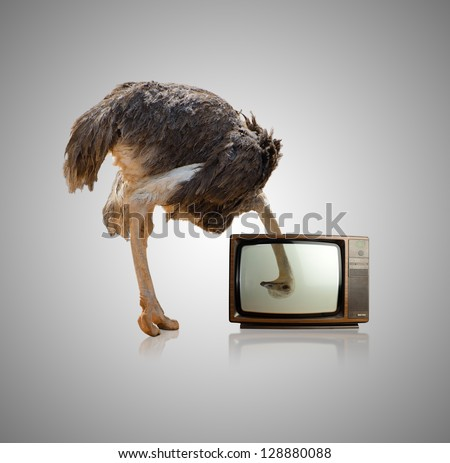 Ostrich Looking Through Television On Gray Background - stock photo