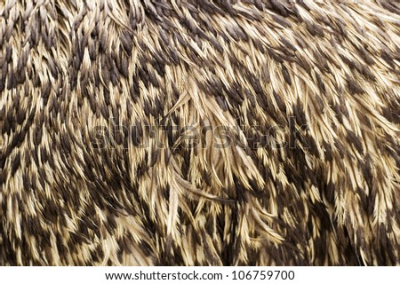 ostrich's feathers as background