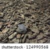 OSWIECIM, POLAND - OCTOBER 22: Boots of victims in Auschwitz, a former Nazi extermination camp on October 22, 2012 in Oswiecim, Poland. It was the biggest nazi concentration camp in Europe. - stock photo