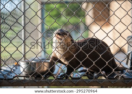 Otter trapped in a cage in the park.