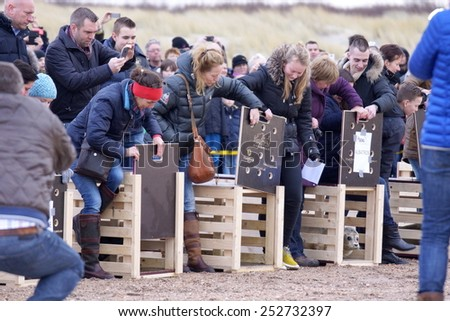 OUDORP, NETHERLANDS - FEBR.14 , 2015 ; Earless seals are released by there helpers on the beach to go to the sea and life in freedom again , after they were cured on  februari 14, 2015 Ouddorp..