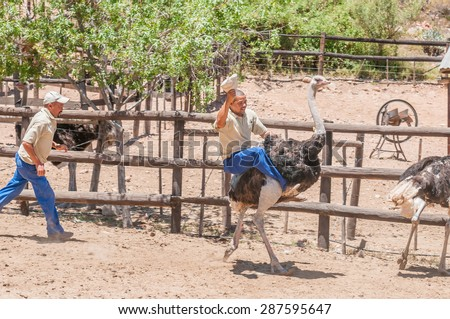 OUDTSHOORN, SOUTH AFRICA - JANUARY 3, 2015: Unidentified people doing Ostrich riding at the Cango Ostrich Farm