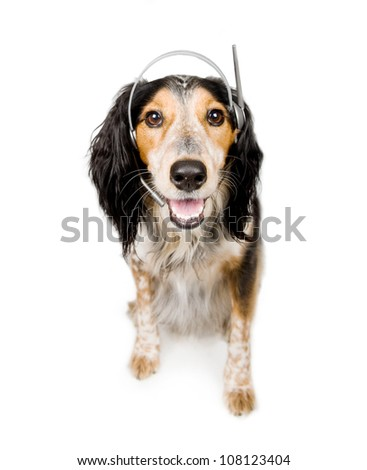 Our friendly helpdesk dog is ready to answer any queries you might have - stock photo