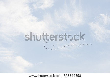 out f focus birds flying over a heavenly blue sky - stock photo