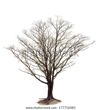 out line of dry tree branch isolated white background use for decorated in nature and plant garden and parking ,out door field meadow