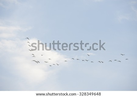 out of focus birds flying over a heavenly blue sky - stock photo