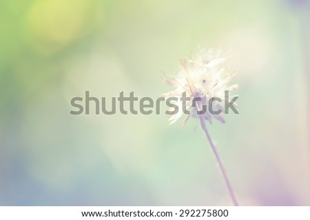 out of focus flower Grass on abstract bokeh background