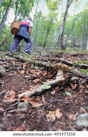 out of focus man, edible mushroom in the forest