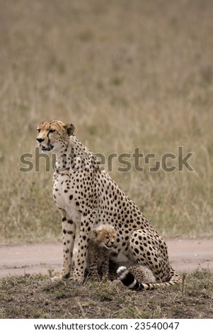 Out on the plains of the Masai Mara game reserve Kenya Africa - stock photo