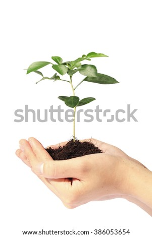 Out stretched hands holding a new seedling for planting. - stock photo