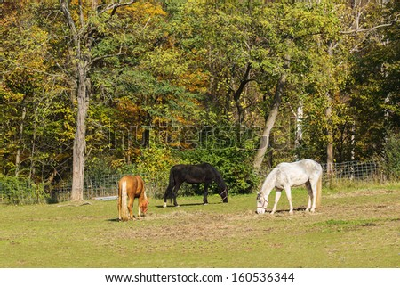 Out To Pasture - stock photo