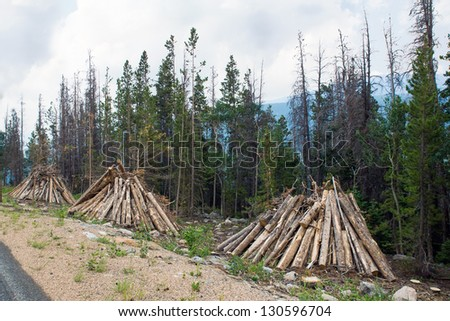 "Outbreak populations of bark beetles - beetles in the National Park ""Rocky Mountains."" Infected trees are cut down and folded into piles for burning - stock photo"