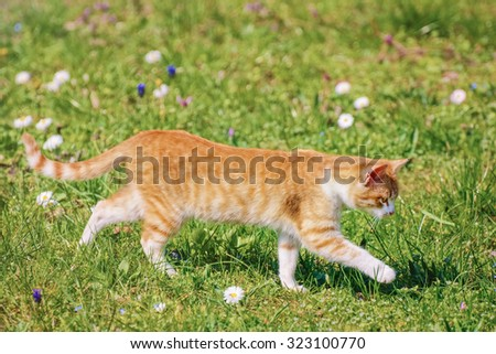 Outbred Cat On The Green Grass - stock photo