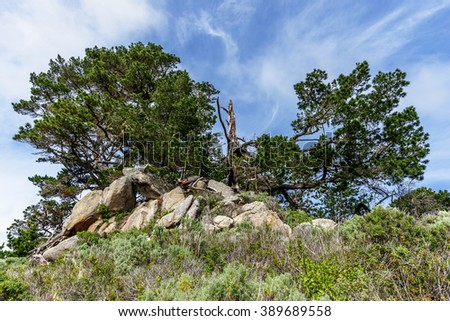 Outcropping of rock & Cypress trees along the North Shore Trail in Point Lobos State Natural Reserve, along the rugged Big Sur coastline, near Carmel and Monterey, CA. on the California Central Coast - stock photo
