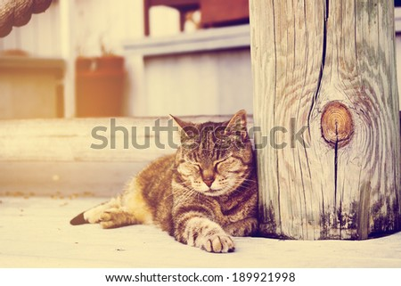 Outdoor Cat - stock photo