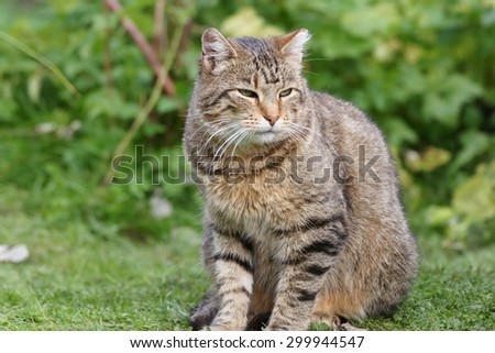 Outdoor cat on the grass in home garden