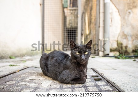 Outdoor cat on the street of the old town - stock photo