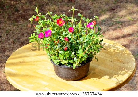 Outdoor flower pot for small garden. - stock photo