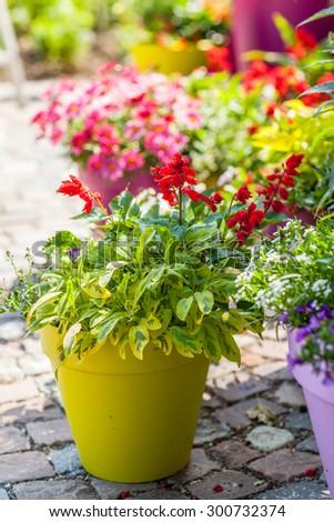 Outdoor flower pots for small garden, patio or terrace - stock photo