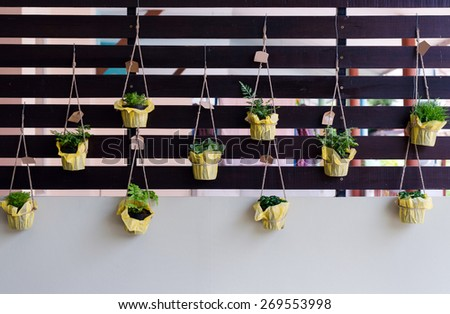 Outdoor foliage plant in pots hang on battens for small garden - stock photo