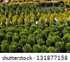 Outdoor garden store center with young seedlings - stock photo