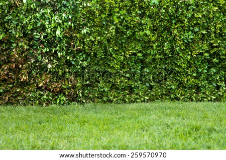 Outdoor horizontal panoramic shot hedges with grass - stock photo