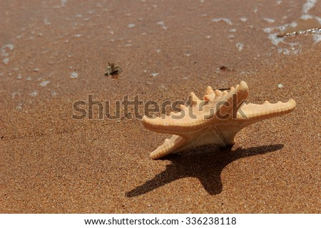 Outdoor image ofClose-up of starfish on sand background over Black Sea, East Crimea, Russia  - stock photo