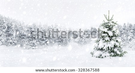 Outdoor panorama shot of a young fir tree in thick snow, for the perfect Christmas mood - stock photo