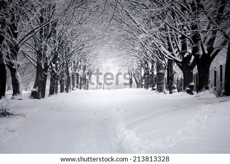 Outdoor photo of beautiful road at winter park - stock photo