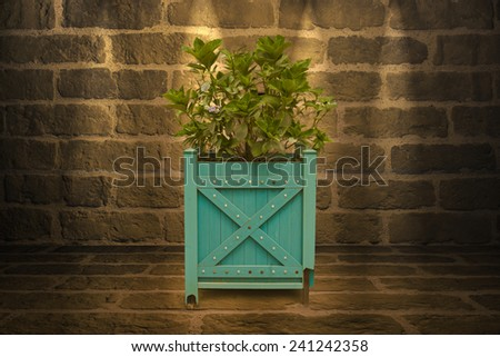 outdoor plant isolated on a wall background - stock photo