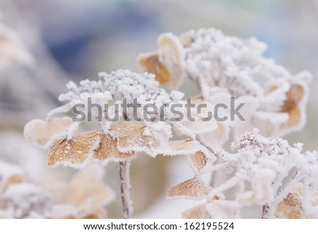 outdoor plants covered with ice on a cold winter day  - stock photo